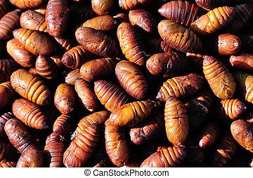 silkworm chrysalis