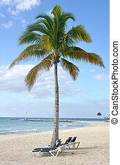 sillas, árbol, tropical, palma, debajo, playa