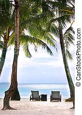sillas, y, palmas, en, playa de arena
