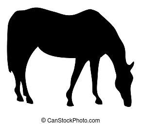 sillhouette, cavalo pasta