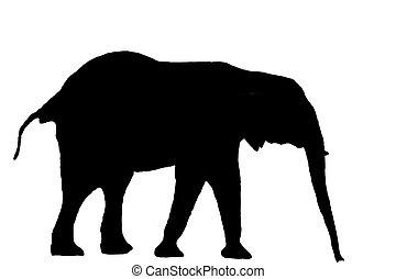 sillouette, elefant