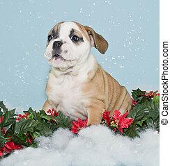 Silly Christmas Bulldog