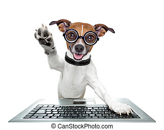 silly computer dog high five with paw