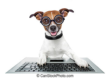 silly computer dog looking directly at you