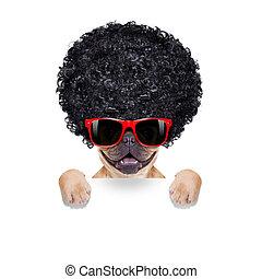silly dog
