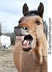 A horse making silly faces