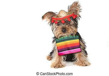 Silly Yorkie Celebrating Cinco De Mayo Holiday - Yorkie...
