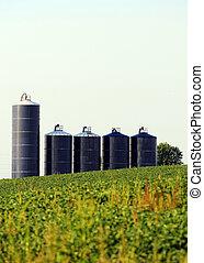 Silos in a soybean field on farm