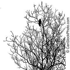 silueta, árbol, aislado, plano de fondo, blanco, cuervos