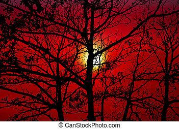 silueta, árbol, cielo, espalda, oscuridad, ocaso, naranja