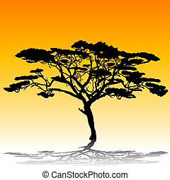 silueta, árbol de goma arábiga