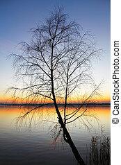 silueta, árbol, en, ocaso