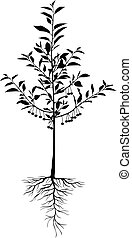 silueta, árvore cereja, seedling, com, bagas