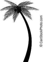 silueta, árvore palma
