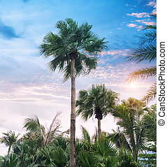 silueta, árvore, palma, paraisos , praia ocaso