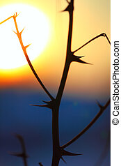 silueta, abstratos, pontas, pôr do sol