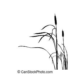 silueta, aislado, vector, caña, plano de fondo, blanco