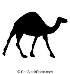 silueta, animal, camelo