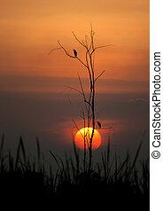silueta, aves, en, un, árbol, en, ocaso