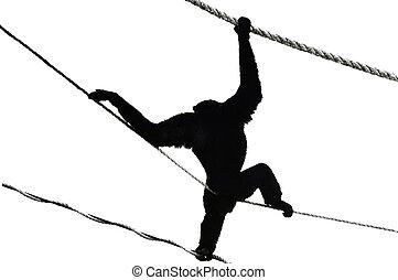 silueta, chimpancé