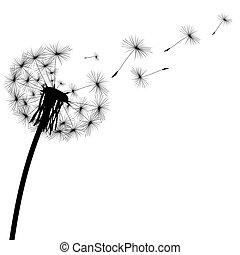 silueta, dandelion, pretas