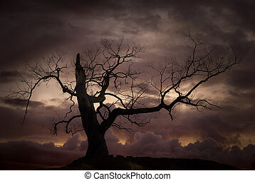 silueta, de, árvore nua, contra, pôr do sol