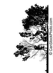silueta, de, árvores.