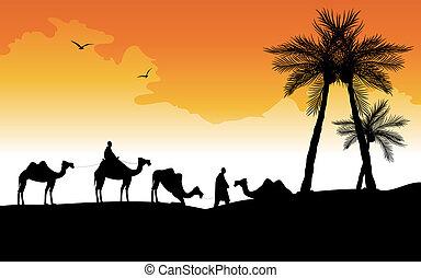 silueta, de, camellos