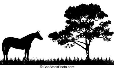 silueta, de, cavalo, e, árvore