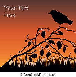 silueta, de, el, pájaro