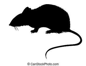 silueta, de, el, rata, blanco, espalda