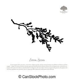 silueta, de, floresça ramo, ligado, um, branca, experiência., árvore cereja, com, flores