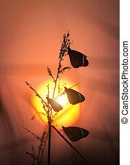 silueta, de, mariposa, grupo, sentado, en, hierba salvaje, en, ocaso
