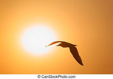 silueta, de, pássaro, oposta, sol