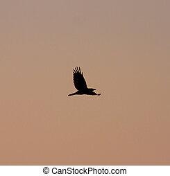 silueta, de, um, pássaro, em, pôr do sol