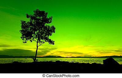 silueta, de, un, árbol, en, ocaso