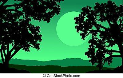 silueta del árbol, en, el, colina, por la noche