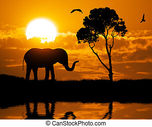 silueta, elefante