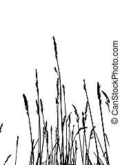 silueta, erva, ilustração, vetorial, fundo, branca