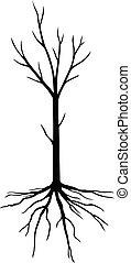 silueta, folhas, sem, árvore, jovem
