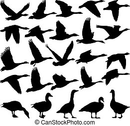 silueta, gansos, negro