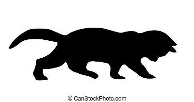 silueta, gato, blanco, plano de fondo
