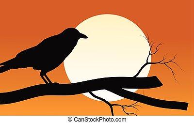 silueta, halloween, luna, fondos, cuervo