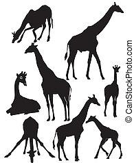 silueta, jirafa, conjunto