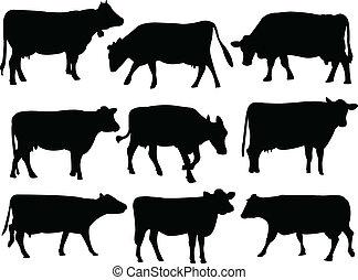 silueta, kráva