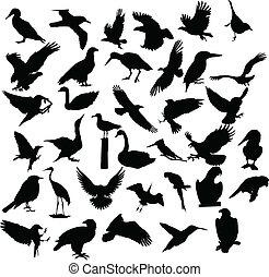 silueta, pájaro