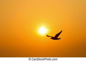 silueta, pássaro, pôr do sol