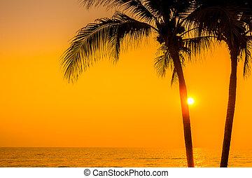 silueta, palmera
