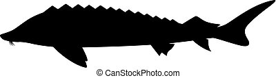 silueta, peixe, sturgeon., pretas, logotipo, ícone