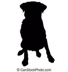 silueta, perro labrador